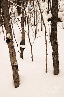 Photograph - Muskoka Winter 3 by Kathi Shotwell