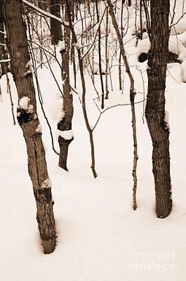 Photograph - Muskoka Winter 3 by Kathi Shotwell