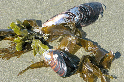 Photograph - Mussels by Frank Townsley