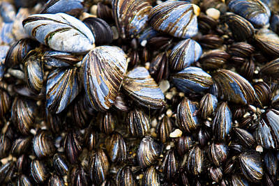 Repeat Photograph - Mussels by Justin Albrecht