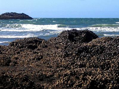 Photograph - Mussels by Will Borden