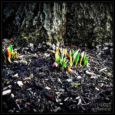 Photograph - Must Be Spring  by Frank J Casella