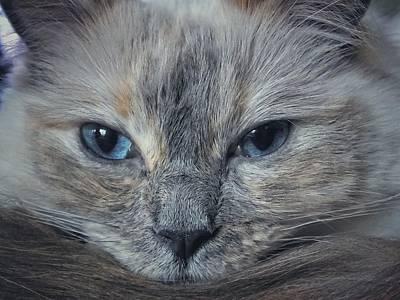 Mustachioed Cat Art Print by Karen Stahlros