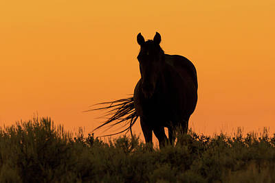 Photograph - Mustang Against Western Sunset by Jack Bell