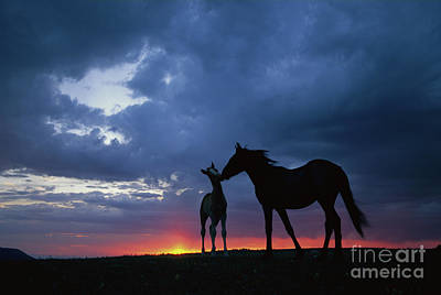 Photograph - Mustang And Foal At Sunset by Yva Momatiuk John Eastcott