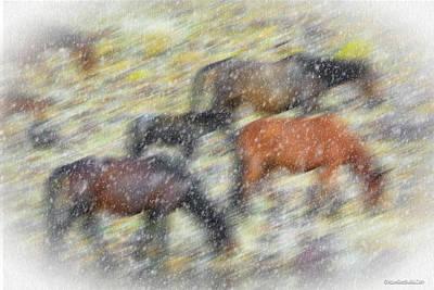 Photograph - Mustang Blizzard by LeeAnn McLaneGoetz McLaneGoetzStudioLLCcom