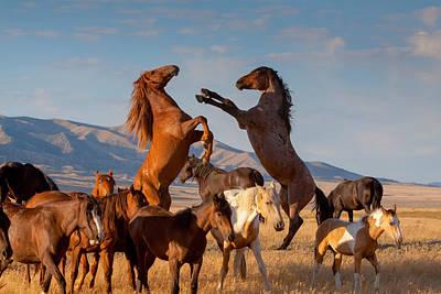 Mustang Clash Art Print
