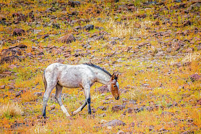 Photograph - Mustang Colt by LeeAnn McLaneGoetz McLaneGoetzStudioLLCcom