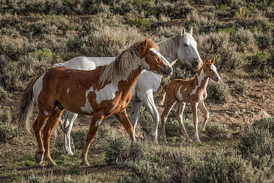Photograph - Mustang Family by Dawn Key