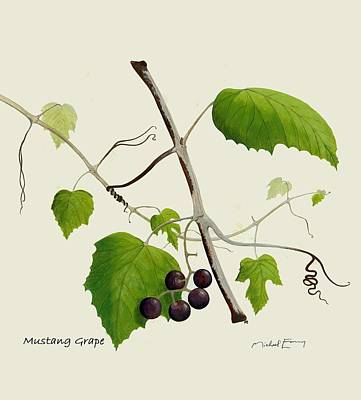 Painting - Mustang Grape - Vitaceae by Michael Earney