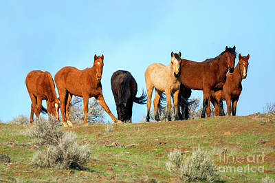 Photograph - Mustang Herd by Mike Dawson