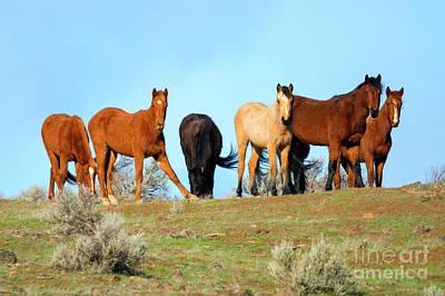 Mustang Herd Art Print