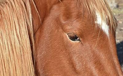 Mustang Macro Art Print