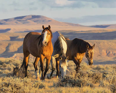 Photograph - Mustang Morning  by Jack Bell
