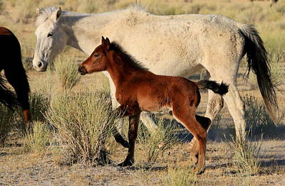 Photograph - Mustang Mother And Foal by Ron  Romanosky