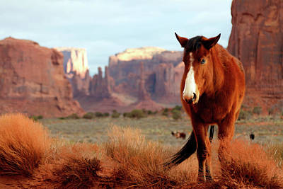 Photograph - Mustang by Nicholas Blackwell