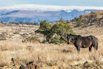 Photograph - Mustang On The Mountain by Belinda Greb