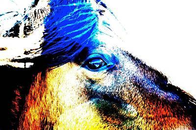 Photograph - Mustang Sally by Amanda Smith