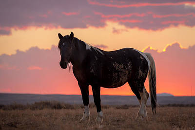 Photograph - Mustang Sunset by Jack Bell