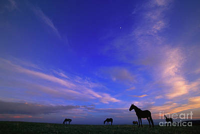 Photograph - Mustangs And Evening Sky by Yva Momatiuk John Eastcott
