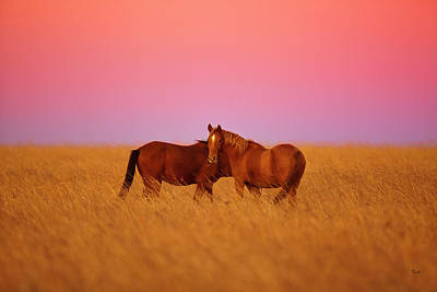 Photograph - Mustangs At Dusk by Heidi Marcinik