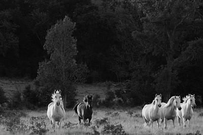 Photograph - Mustangs In The Wild by Vonda Barnett