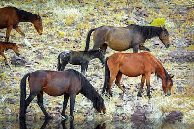 Photograph - Mustangs by LeeAnn McLaneGoetz McLaneGoetzStudioLLCcom