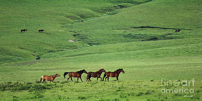 Photograph - Mustangs Of The Flint Hills by E B Schmidt