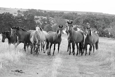 Photograph - Mustangs On The Path by Vonda Barnett