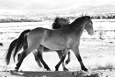 Mustangs Art Print
