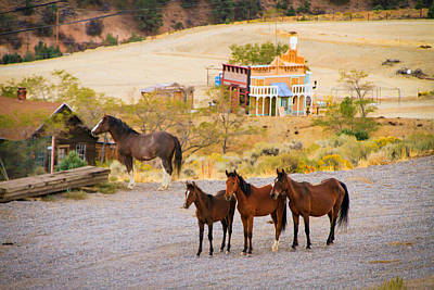 Photograph - Mustangs Standing Their Ground by Bonnie Follett