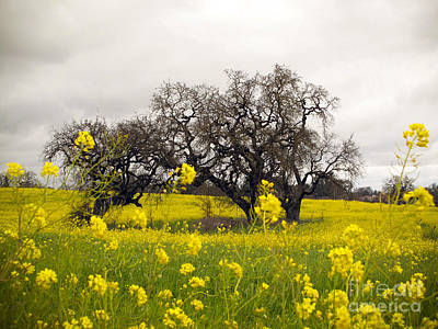 Print featuring the photograph Mustard And Oaks by Leslie Hunziker