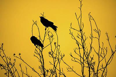 Crow Photograph - Mustard Dawn by Heather Joyce Morrill