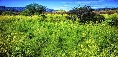 Photograph - Mustard Field by Judith Barath