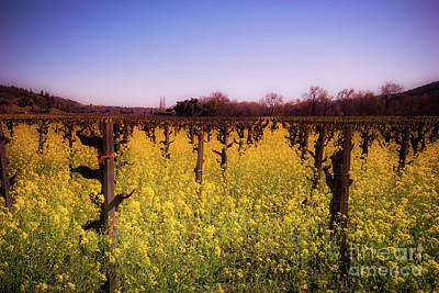 Photograph - Mustard Flowers Dry Creek Valley by Blake Webster