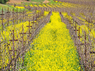 Photograph - Mustard Flowers In Napa Valley by Robin Zygelman
