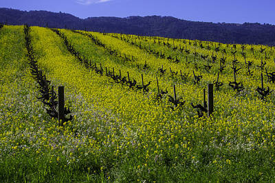 Sonoma County Photograph - Mustard Grass Landscape by Garry Gay