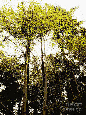 Photograph - Mustard Trees by Eve Penman