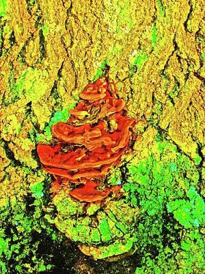 Northeastern University Photograph - Mutant Emerald Tree And Fungi by Mary Ann Weger