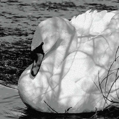 Swan Digital Art - Mute Swan by Betty LaRue