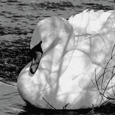 Swan Digital Art - Mute Swan by Betty LaRue