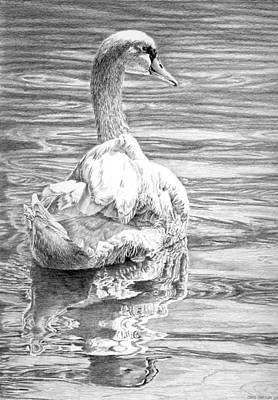 Waterfowl Drawing - Mute Swan by Craig Carlson