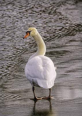 Photograph - Mute Swan by LeeAnn McLaneGoetz McLaneGoetzStudioLLCcom