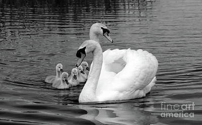 Photograph - Mute Swans by Peter Skelton