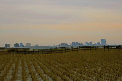 Photograph - Muted City Beyond Bramble by My Lens and Eye   - Judy Mullan -