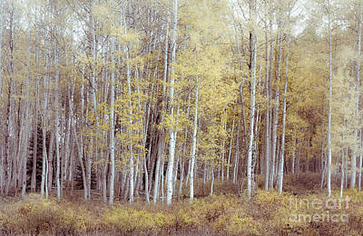 Photograph - Muted Forest by The Forests Edge Photography - Diane Sandoval