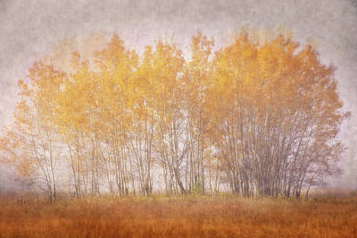 Photograph - Muted Gold by Leda Robertson