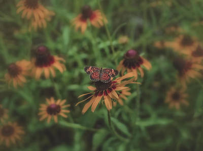 Photograph - Muted Nature   by Philip A Swiderski Jr