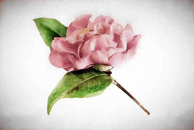 Photograph - Muted Pink Camellia Still Life by Kay Brewer