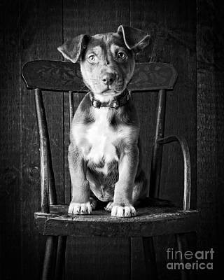 Photograph - Mutt Black And White by Edward Fielding